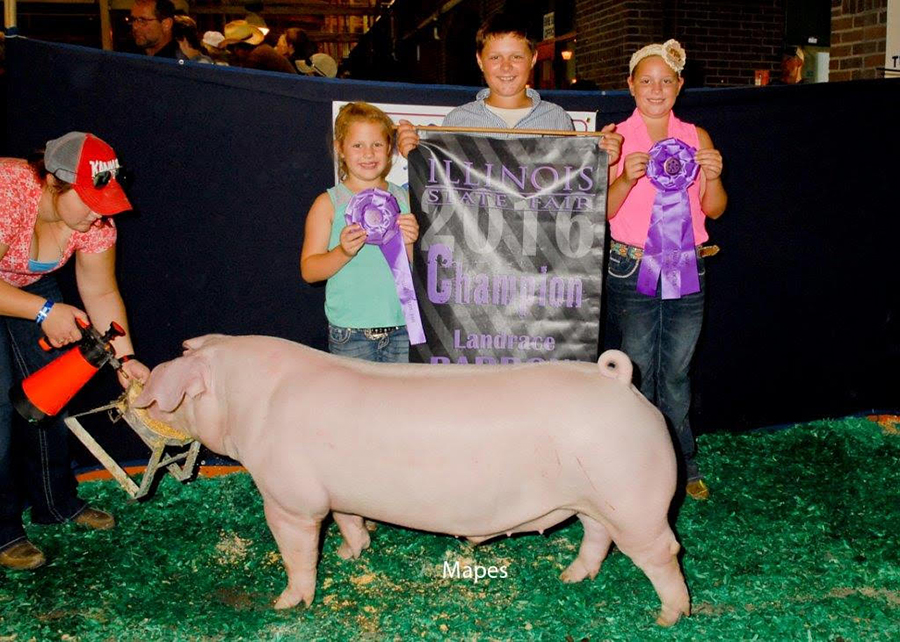 Champion Landrace Barrow, 2016 Illinois State Fair - Sydney Bertolino